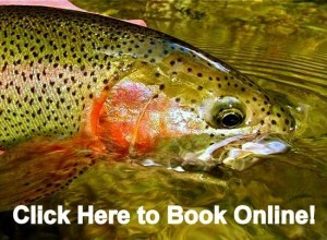 Fly Fishing the Smokies,Fly Fishing Guides,Great Smoky Mountains,Cherokee Fly Fishing, Fly Fishing,