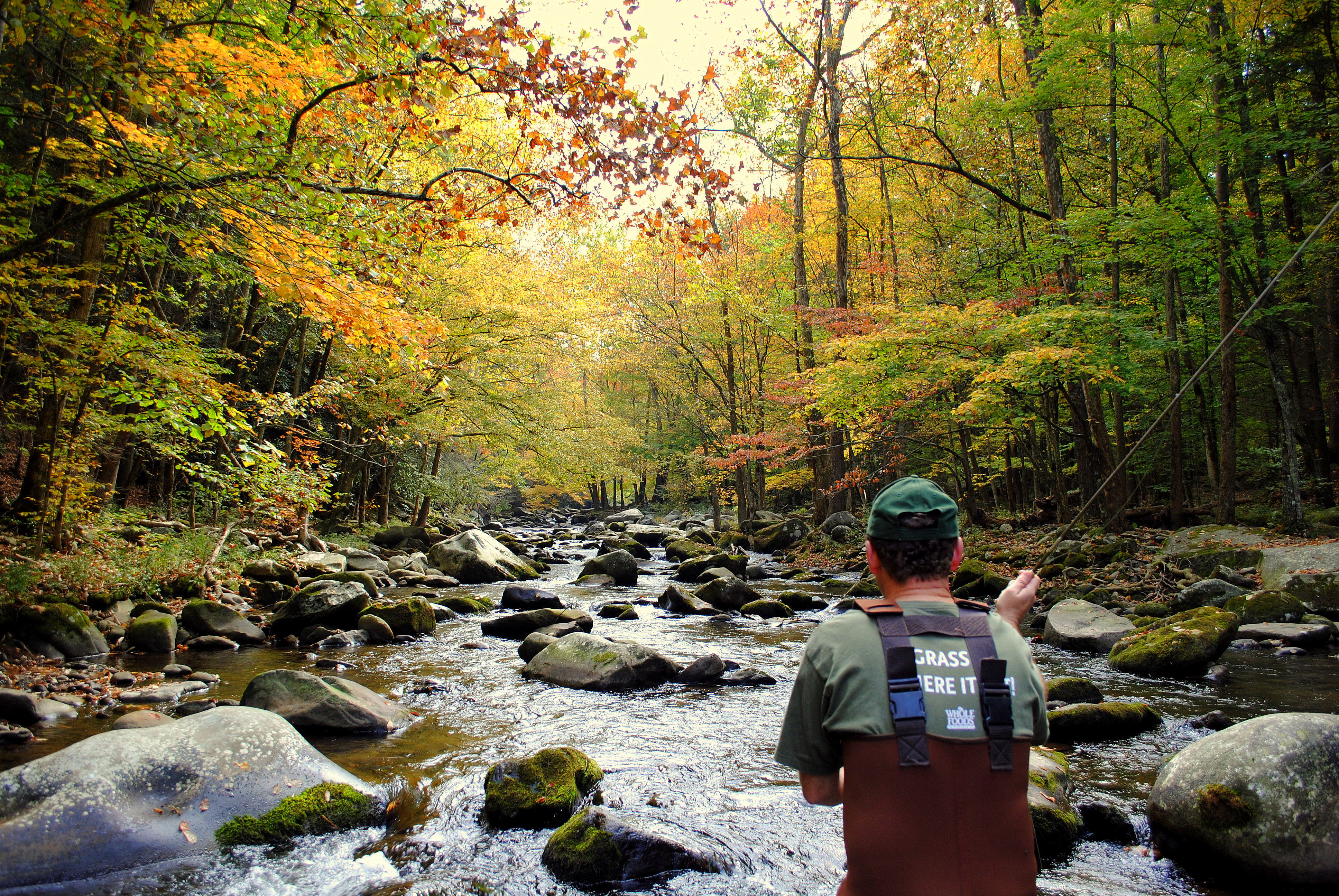 Fall trout special smoky mountain guided fly fishing for Fly fishing smoky mountains