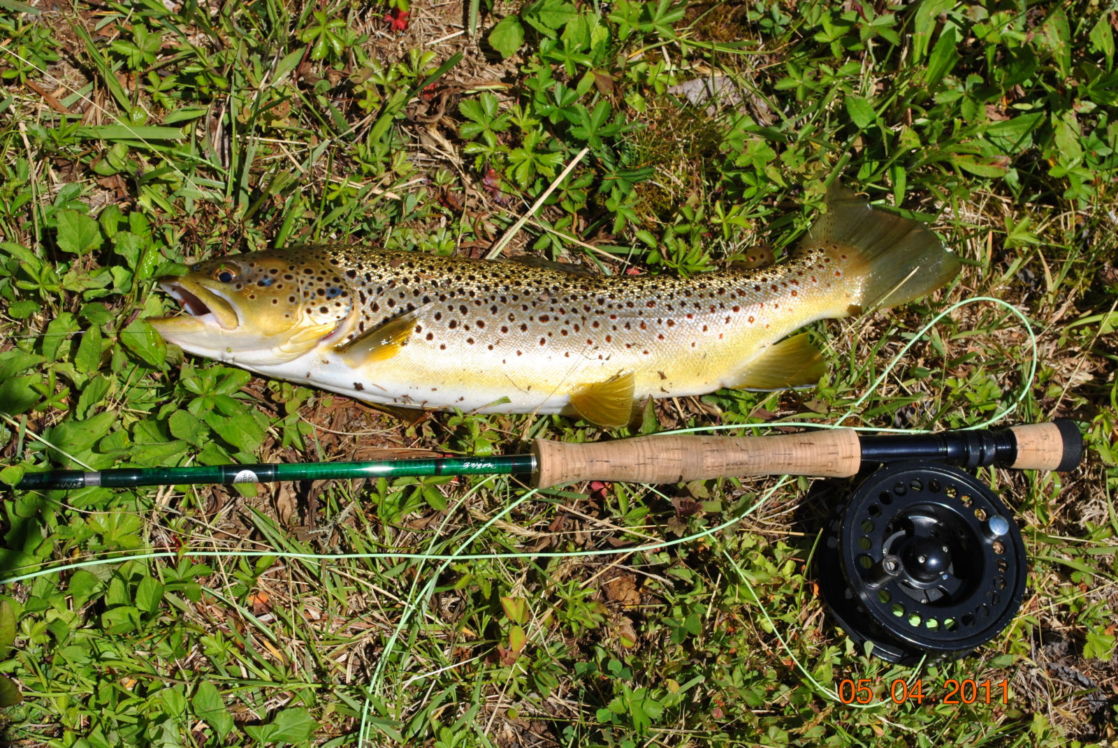 Photo gallery guided fly fishing in cherokee ncguided for Cherokee trout fishing