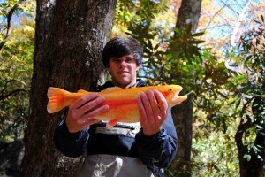 Cherokee Golden Trout. Fall Fly Fishing, Fly Fishing the Smokies, Fall Trout Special,