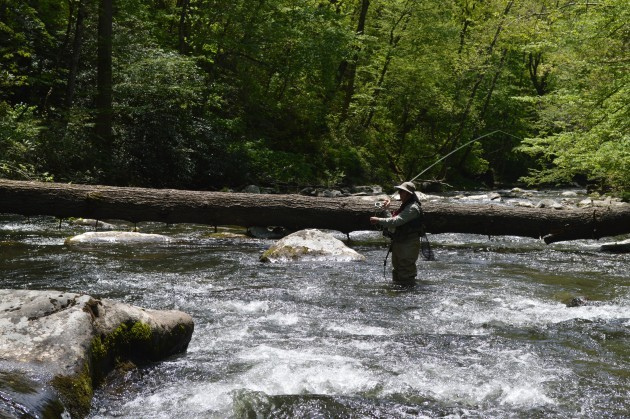 Hazel Creek Camping, Fly Fishing Hazel Creek, Hazel Creek Fly Fishing Guides, Fly Fishing the Smokies, Hazel Creek, Fly Fishing