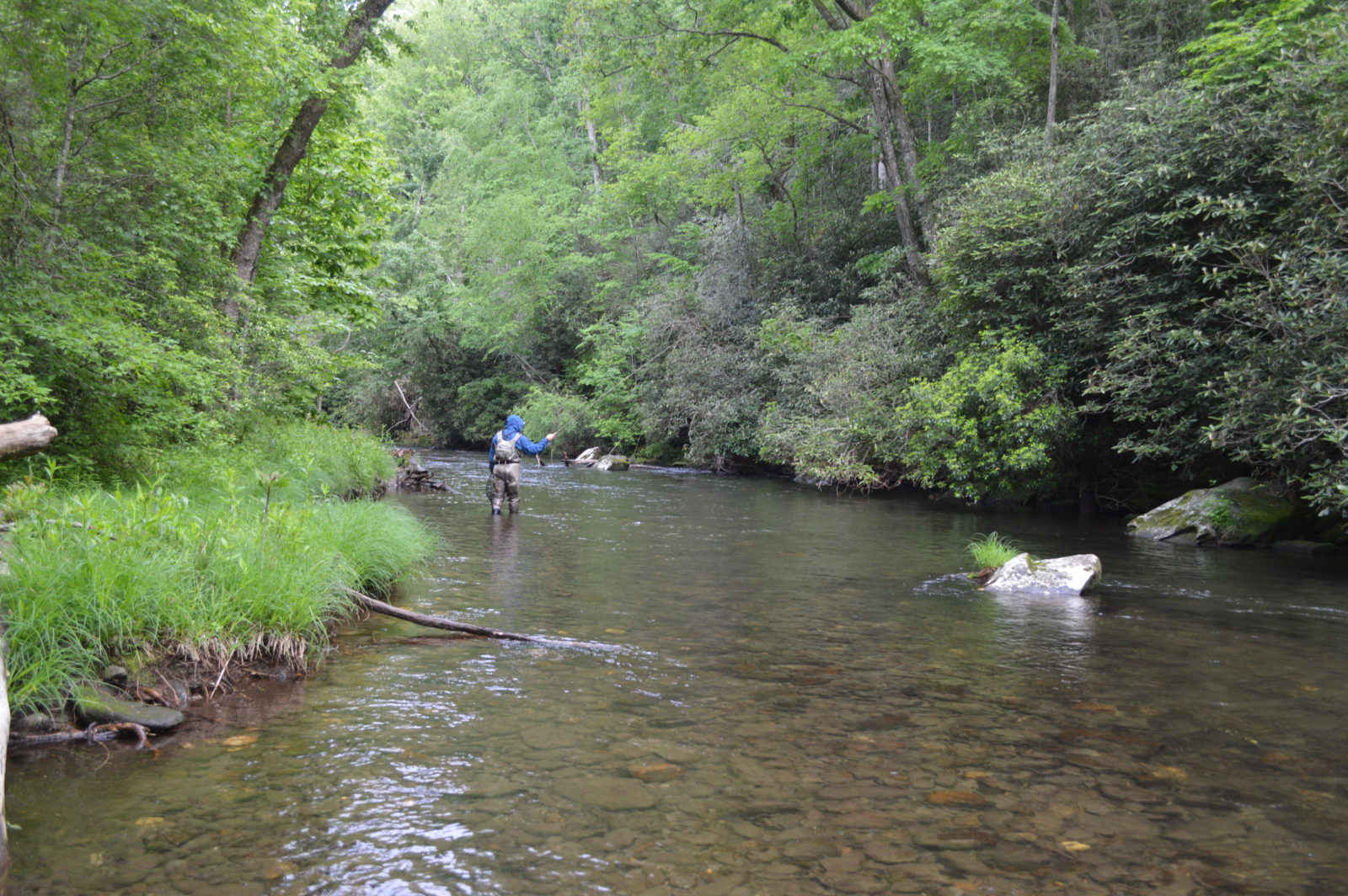 Hazel creek camping trip guided fly fishing in cherokee for Campsites with fishing