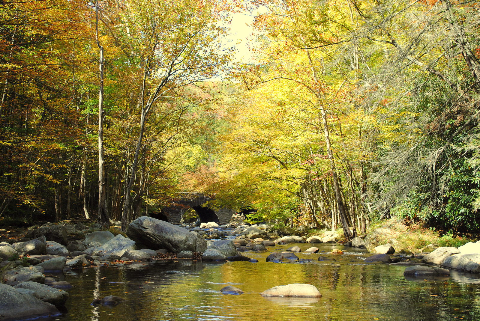 Photo gallery fly fishing guides and trips in gatlinburg for Smoky mountain fly fishing