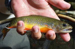 Fly Fishing Gatlinburg, Fly Fishing Pigeon Forge, Great Smoky Mountains National Park, Fly Fishing, Fly Fishing the Smokies