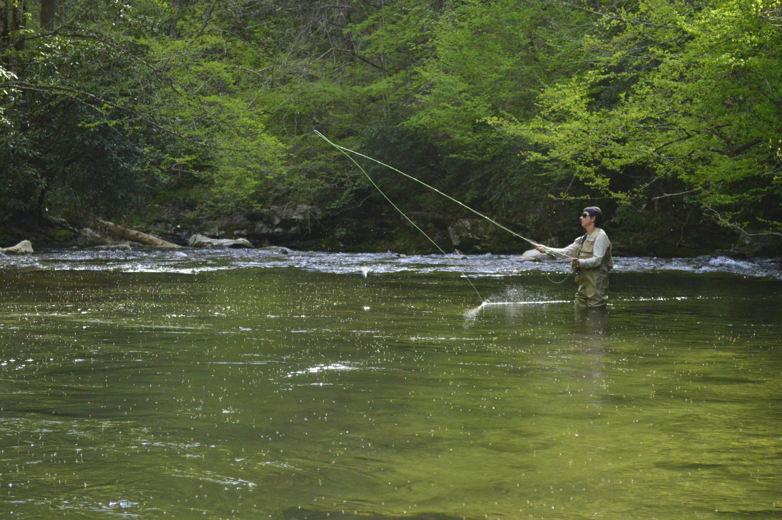 Fly fishing the smoky mountains for Smoky mountain trout fishing