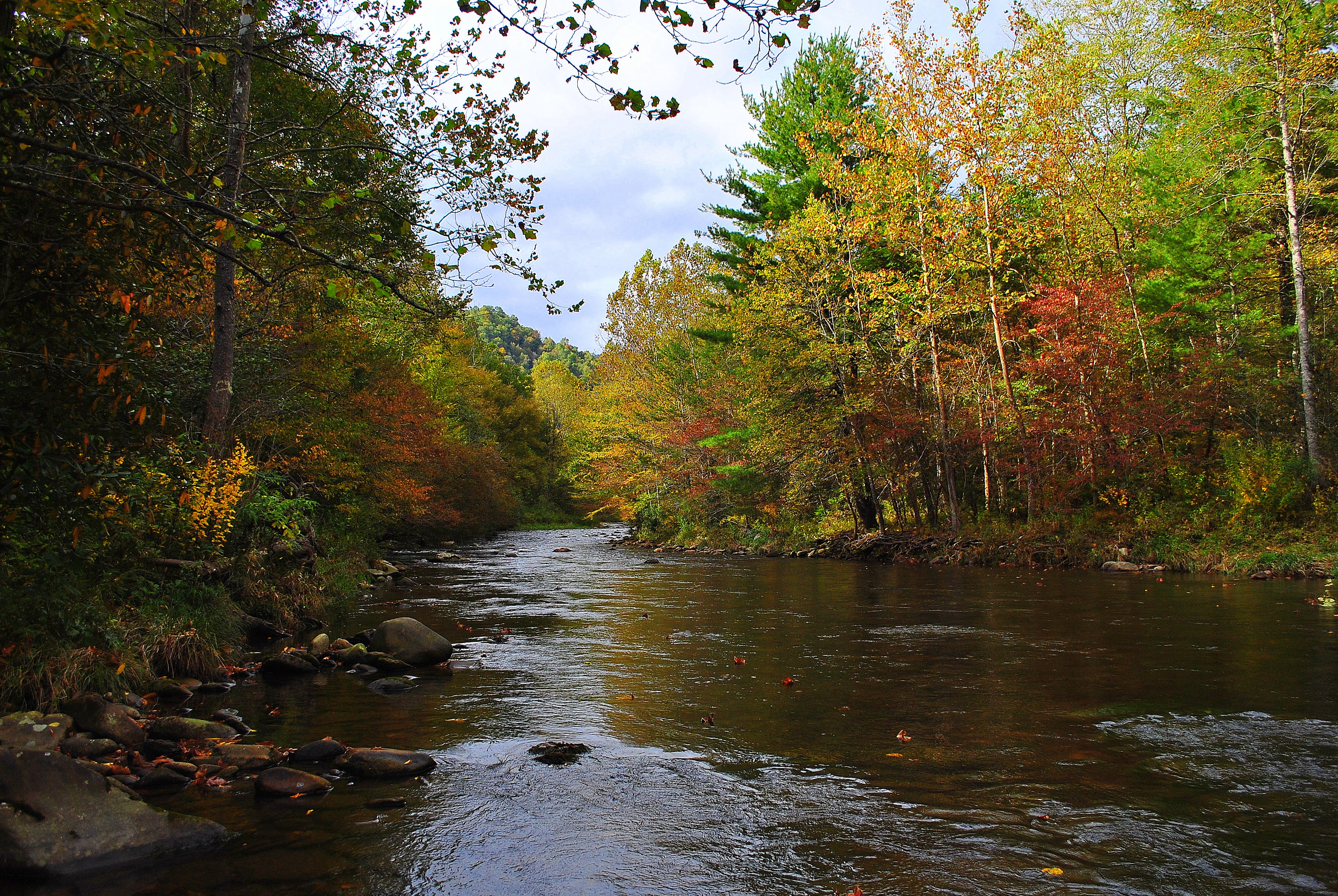 Fall trout special guided fly fishing in gatlinburg for Fishing in gatlinburg tn