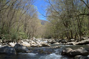 Great Smoky Mountains National Park, Fly Fishing, Fly Fishing the Smokies, Gatlinburg, Bryson city, Pigeon Forge, Sevierville, Cherokee