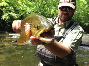 Fly Fishing the Smokies, Brown Trout,