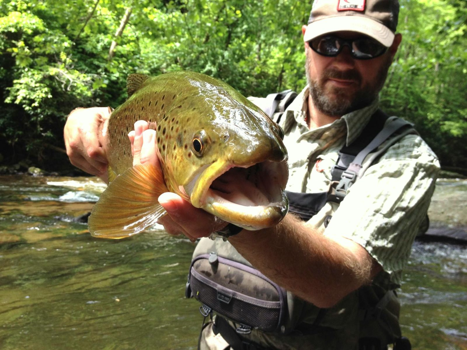 Fly fishing guides great smoky mountains gatlinburg and for Smoky mountain trout fishing
