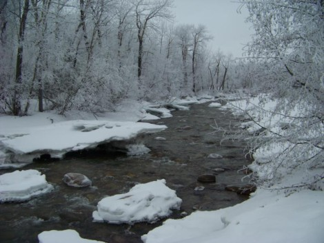Winter Fishing in the Smoky Mountains,