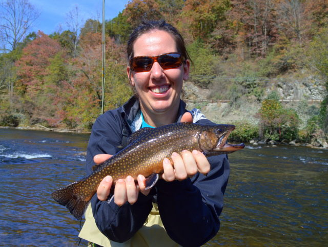 Great smoky mountains fishing report october 23rd trout for Smoky mountain trout fishing
