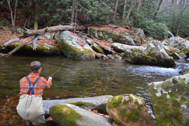 Winter fly fishing trophy trout fly fishing special for Fly fishing smoky mountains