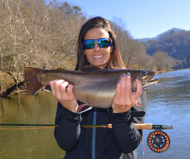 Great smoky mountains fishing report december 14th for Nc trout fishing regulations