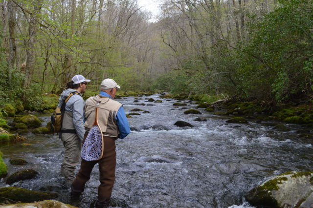 Great smoky mountains national park fly fishing guides and for Smoky mountain trout fishing