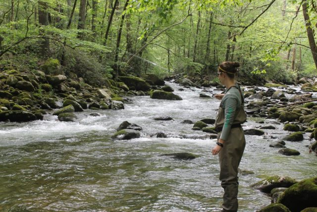 Great smoky mountains fishing report june 1st fly fishing for Fishing in gatlinburg tn
