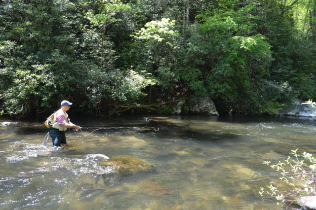 Hazel creek fly fishing day trips guided fly fishing on for Nc trout fishing regulations