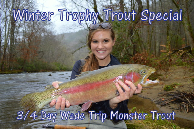 Winter Trophy Trout Special Fly Fishing Smoky Mountains